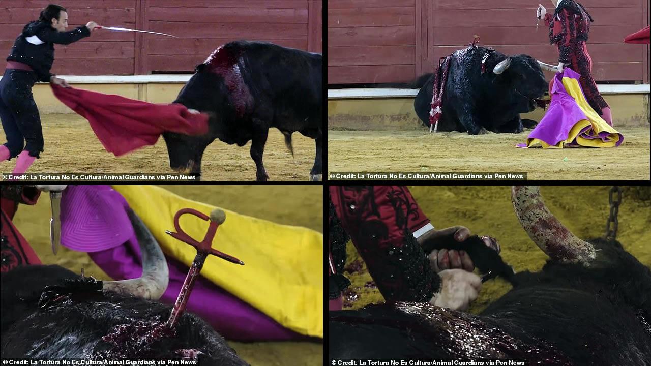 Spain holds first bullfight since coronavirus lockdown